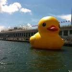 Rubber Duck Art Installation