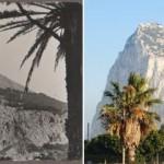 Gibraltar 1932 & 2013